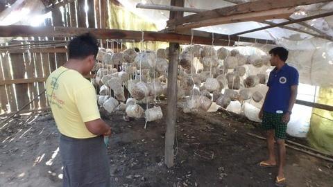ミャンマー農場計画始動!