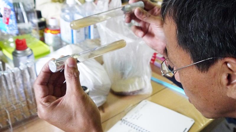 HM真菌は様々な条件で常に試験を繰り返しています。