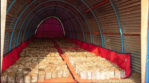 ミャンマー農場 新植菌法開始